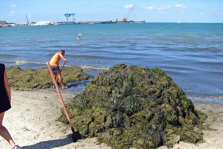 Анапа, водоросли на пляже