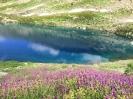 Цветы озеро Рыбка