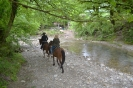 Прогулка на лошадях Никитино
