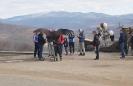 Сип Белоголовый и туристы